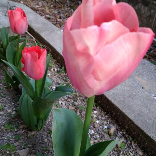 春の訪れ♡part4