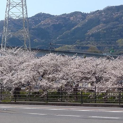 春の訪れ♡part.5